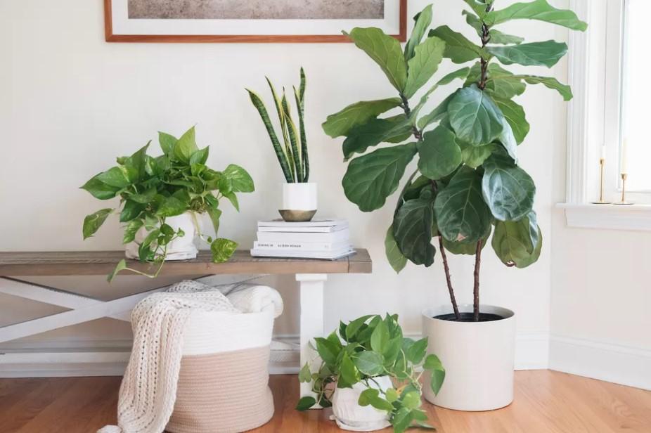άσπρες γλάστρες φυτά