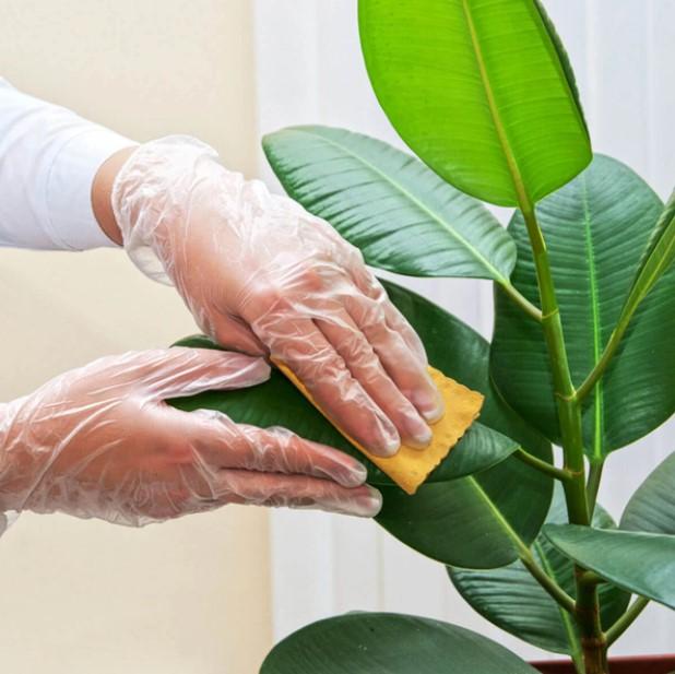 χέρι σκουπίζει φύλλα φυτού
